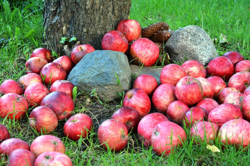 TIME FOR APPLE PICKING & CAMPFIRES  If a day of apple picking, hiking, and ending with the warm glow of a campfire sounds good, then read on.