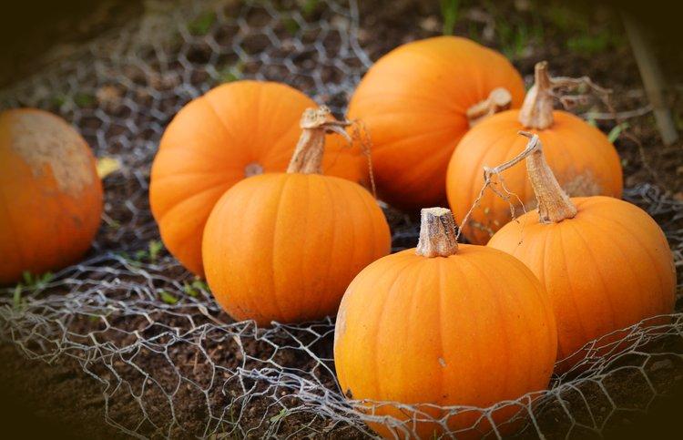 pumpkins-lynchburg