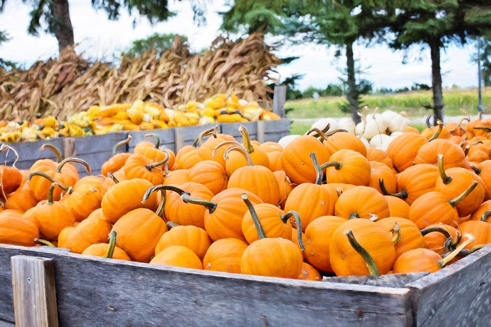 Pumpkin Patches Near Lynchburg, VA - The fall season is the perfect opportunity to get outside and enjoy this cool crisp weather with the family. Here is a list of some pumpkin patches you can visit for great outdoor family fun.