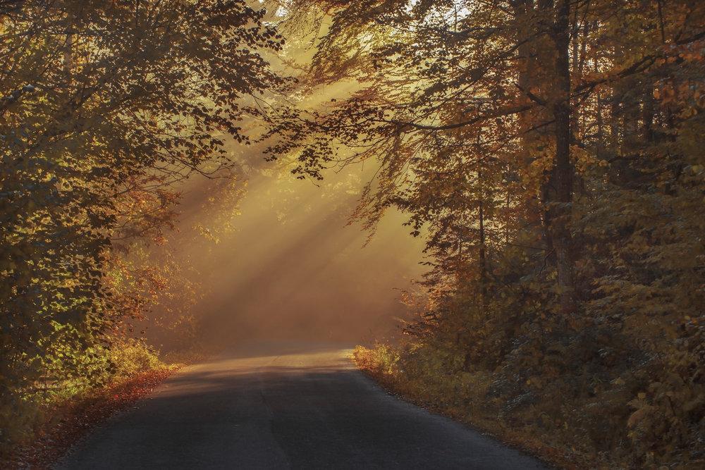 fall-foliage-2.jpeg