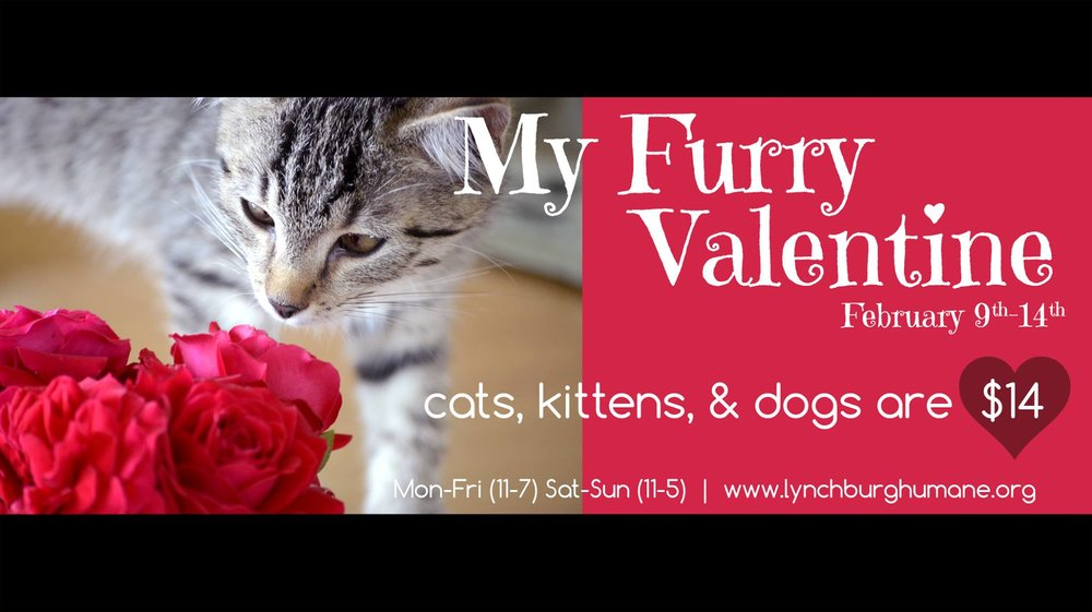 Lynchburg Humane Society - Valentine's Day is right around the corner so why not adopt your favorite fluffy friend for only $14.