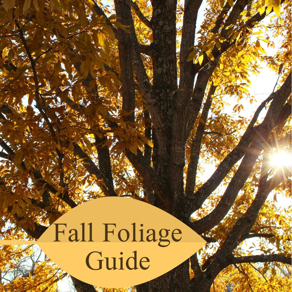 FALL FOLIAGE GUIDE.jpg