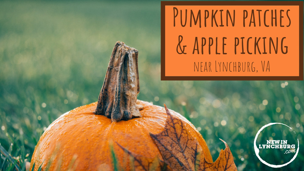 Pumpkin Patches & Apple Picking Near Lynchburg, VA - There's nothing like picking pumpkins or apples in Lynchburg, VA on a brisk Fall day with your family and friends. There are so many apple orchards, farms, and pumpkin patches near Lynchburg, VA that you'll never run out of fun Fall activities—we challenge you to visit them all!