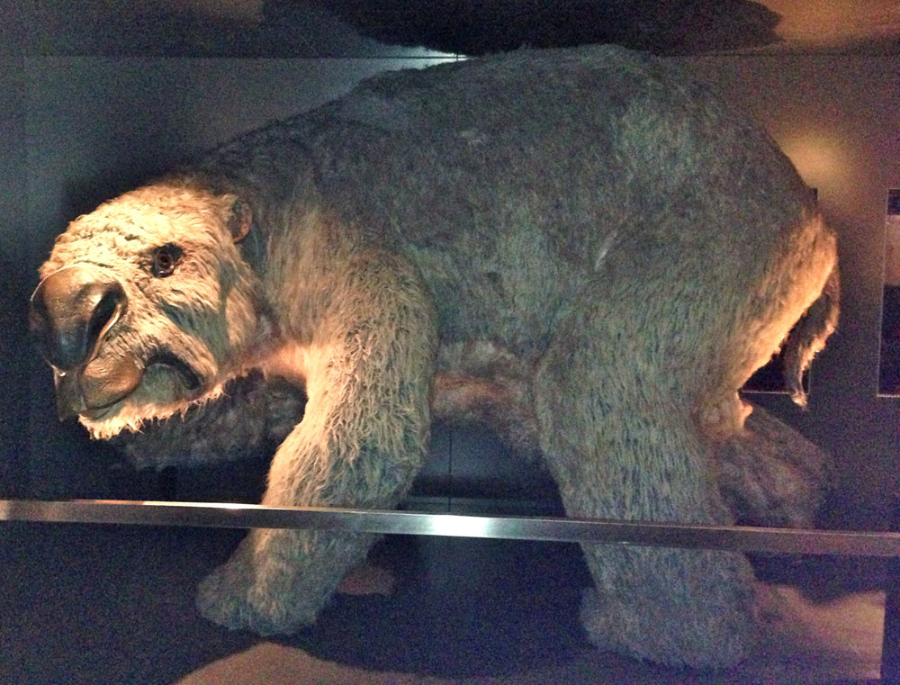 Diprotodon: giant wombat.
