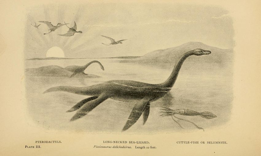 Image from the    Biodiversity Heritage Library    (PD).