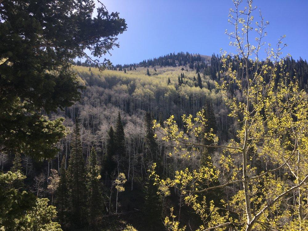 A trek through Big Cottonwood Canyon, just outside of Salt Lake City, UT.