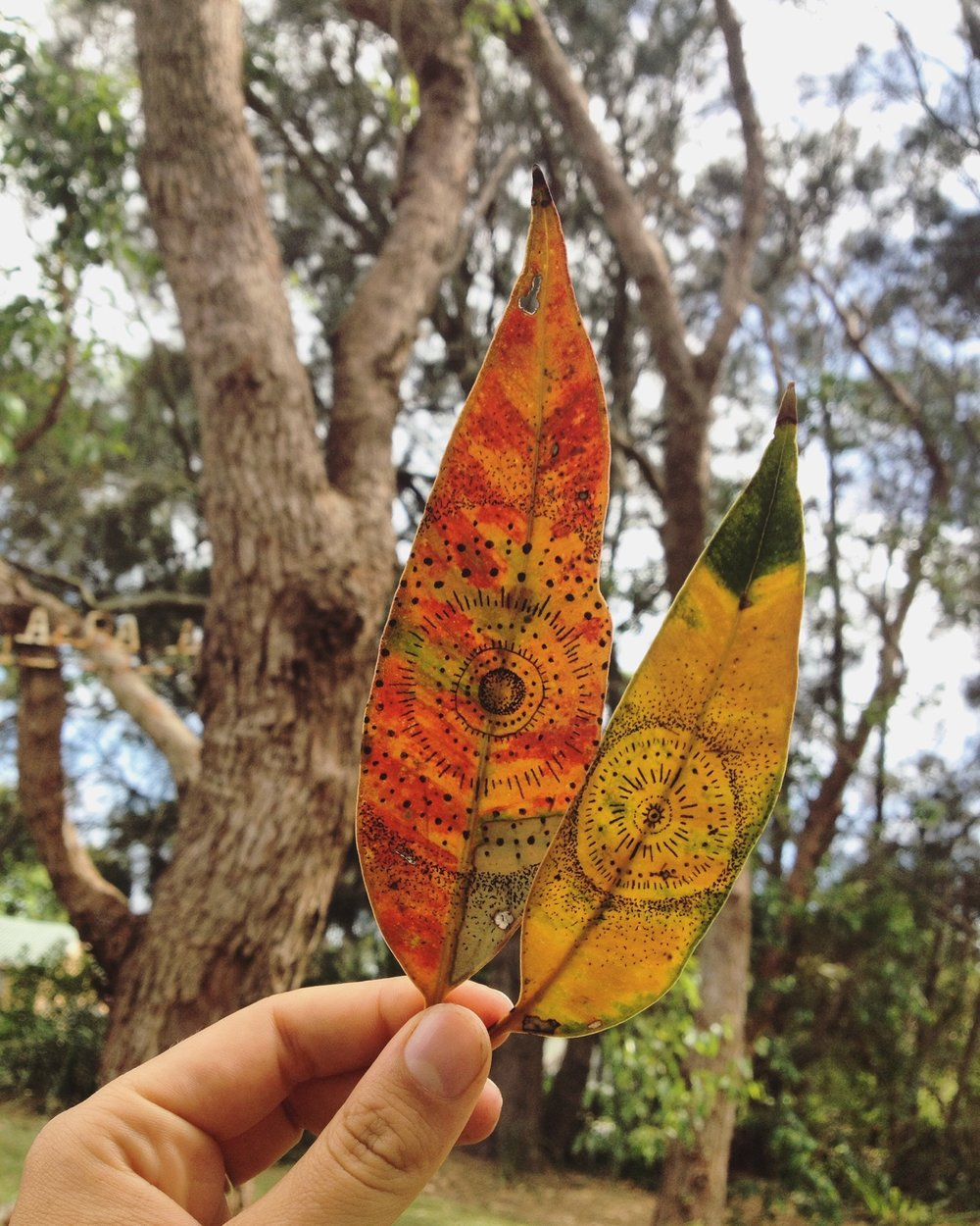 I love drawing on leaves that I find while hiking