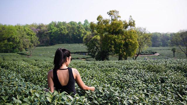 Got tea? 🌿