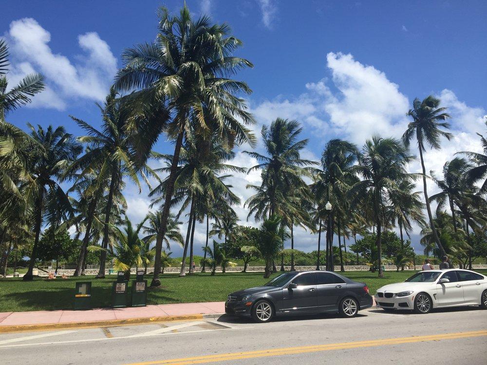 palm trees Miamia