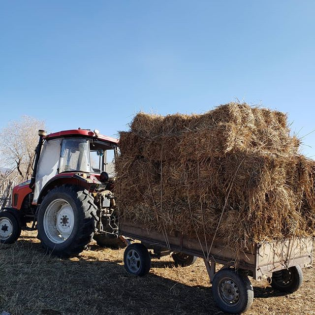 Hay for our boys