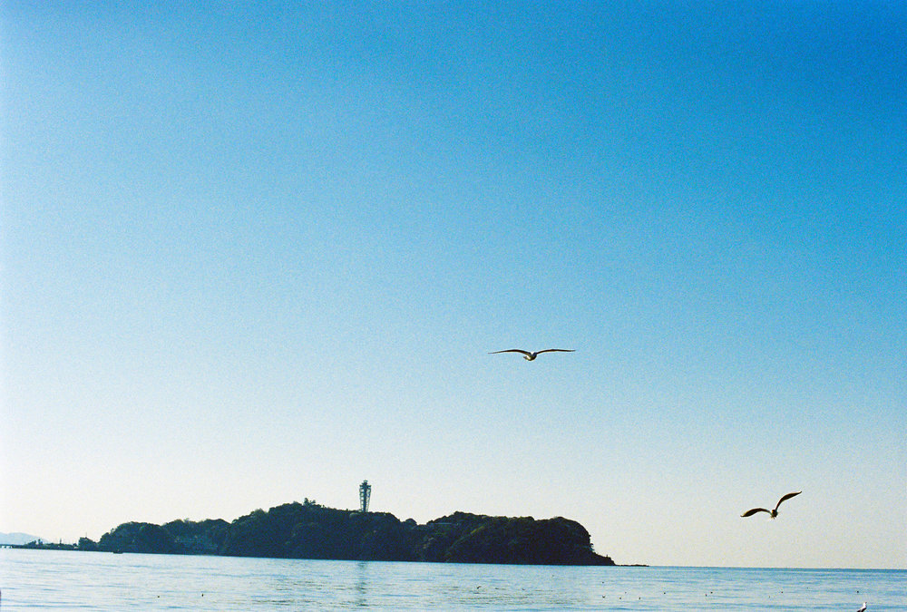 江ノ島漁2.JPG