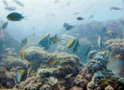 Fish Sanctuary