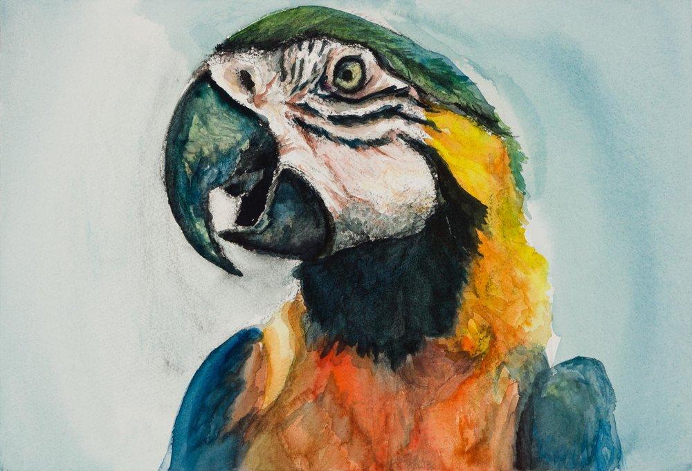 "Media : Watercolor on Paper  Size : 10"" by 14""  Date : Nov 2016   Ref Photographer :    Tom Slatin"
