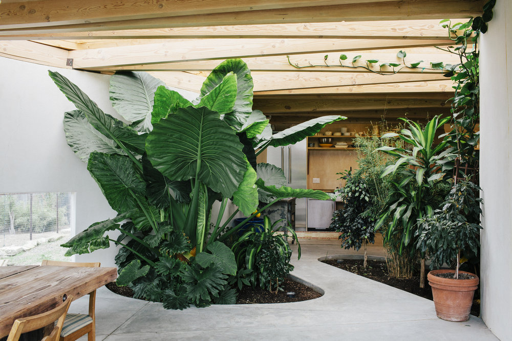 living room of a house by Mork Ulnes Architects with tropical plants inside