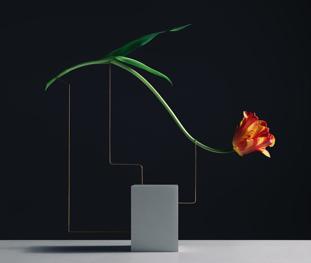 Minimal flower composition by Carl Kleiner