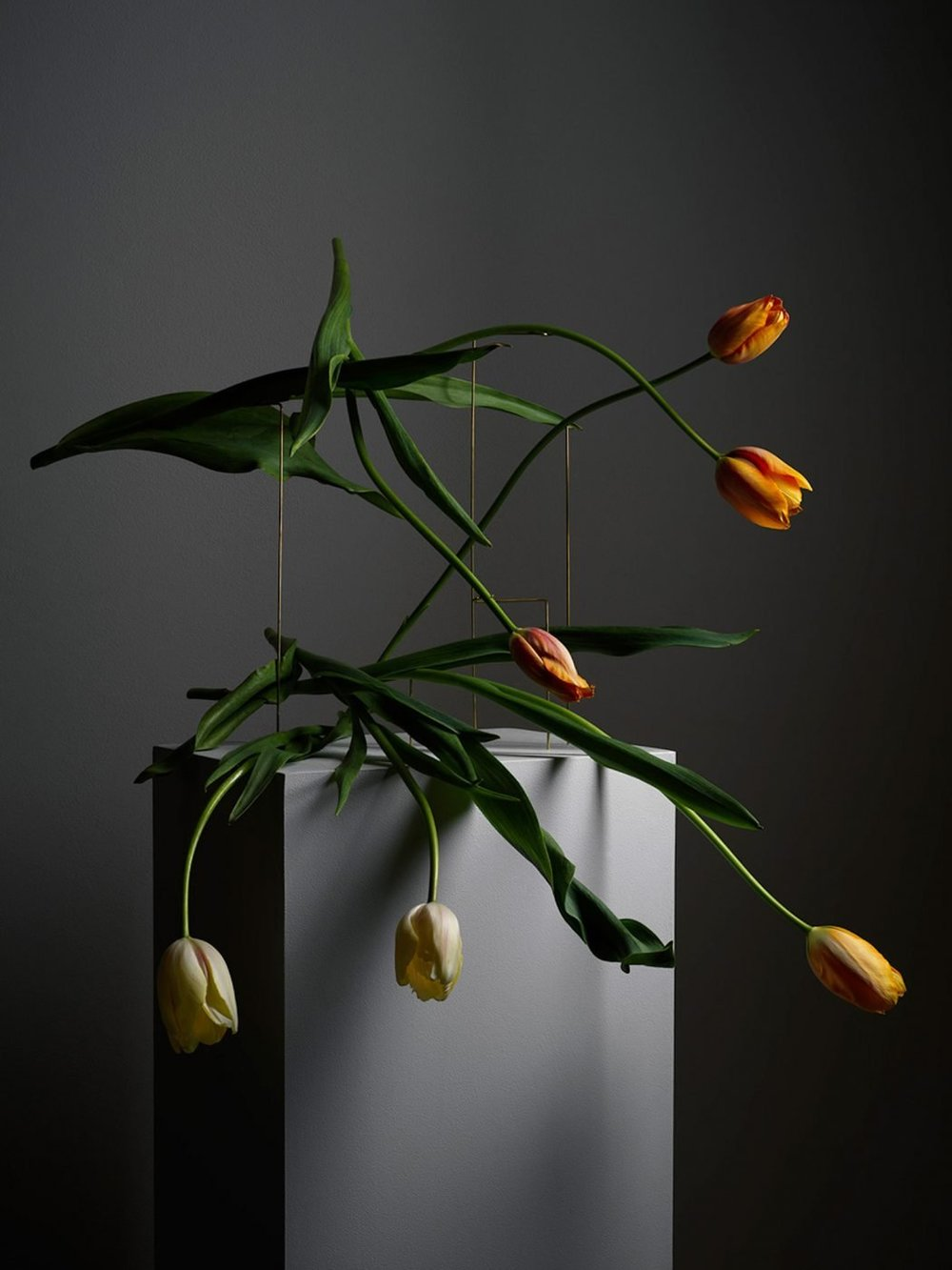 Tulip composition on grey background by Carl Kleiner