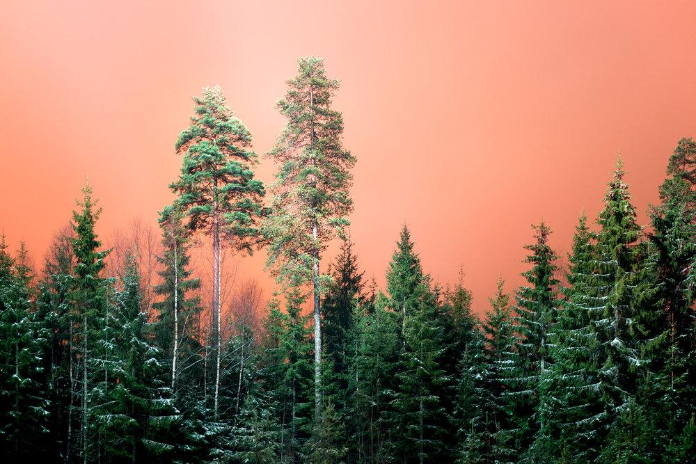 Orange sky and green trees