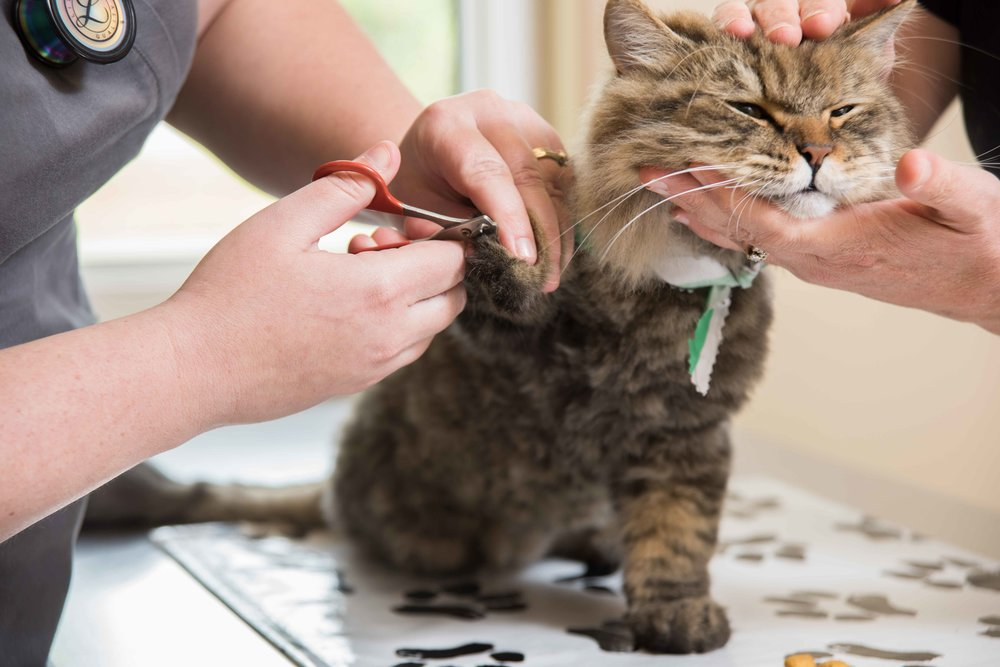 Prescott-Animal-Hospital-Grooming.jpg