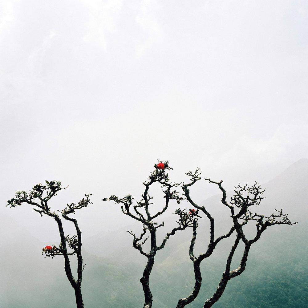 Flowering tree.jpg