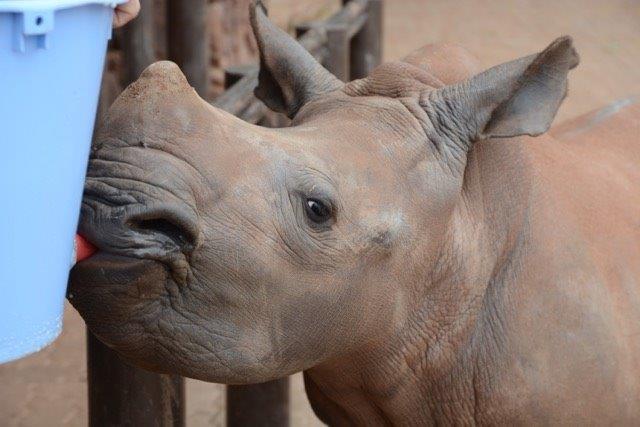 rhino - baby feeding.jpg