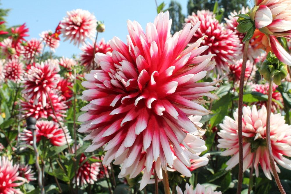 fall_Blossom.jpg