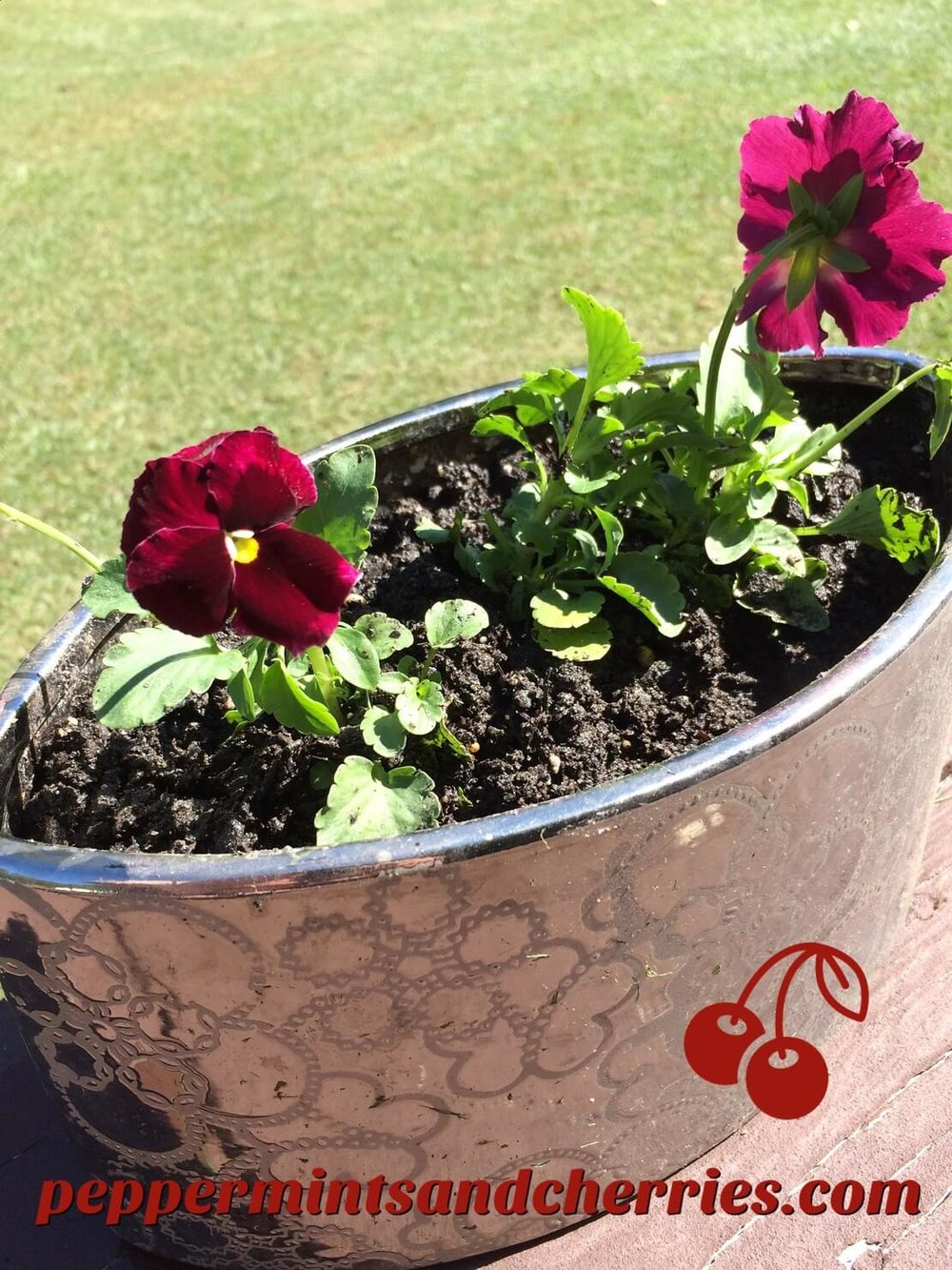 Pansies in a Silver Container