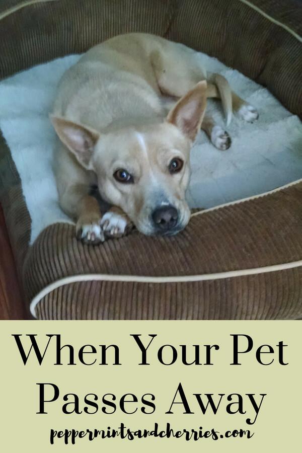 Pet Loss Story www.peppermintsandcherries.com