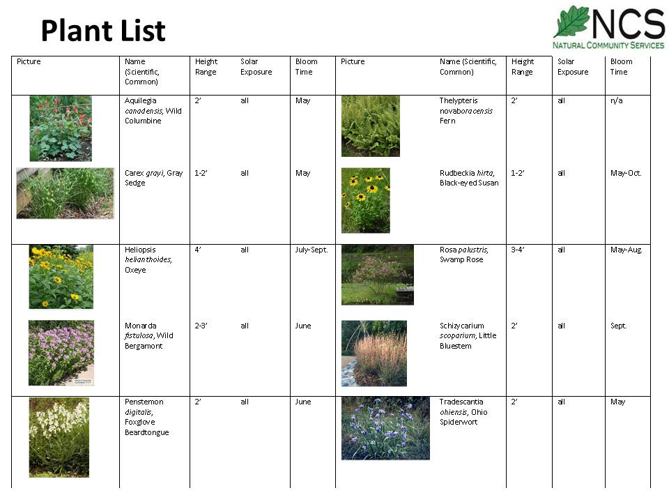 NCS matches the right plant species to the place's soil, water, light & biological conditions