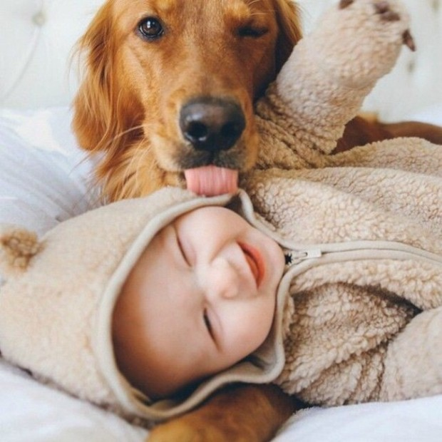 dogs-and-babies-1.jpg