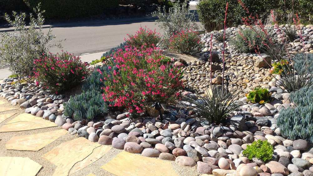 Xeriscape - A popular phenomenon that many Coloradans have started to lean towards. Xeriscape creates a more desert like space while giving you the piece of mind that you are contributing to the conservation of our waterways. With beautiful grasses and sedums, you can create a space that is not only beautiful but environmentally conscious.