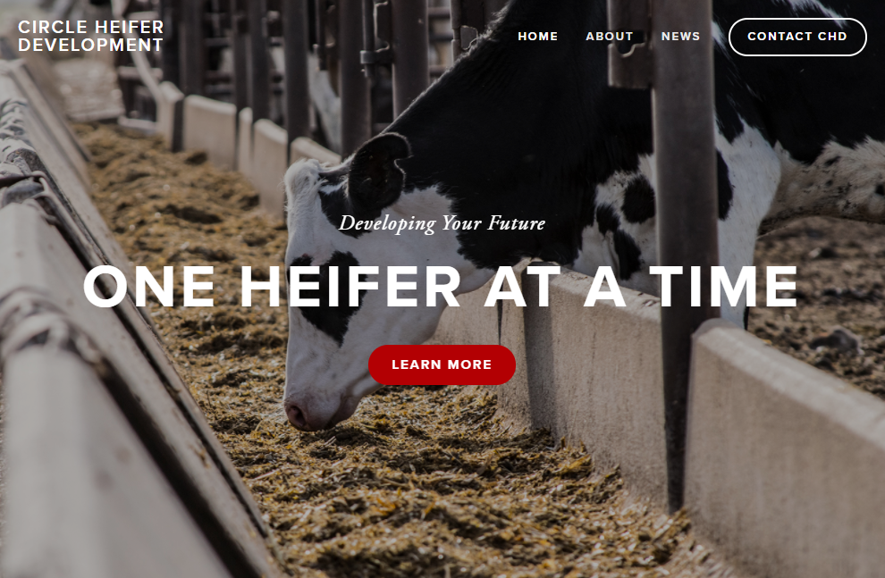 Circle Heifer Development