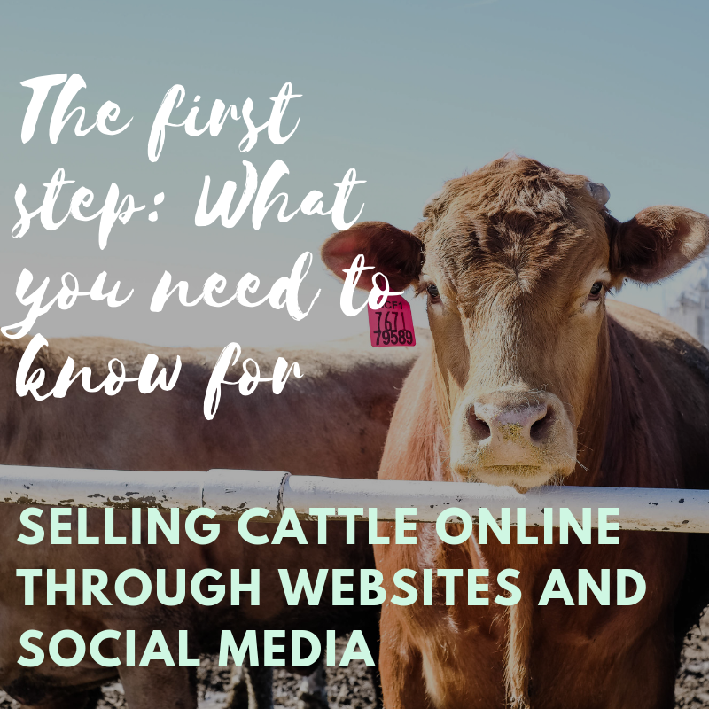 Everything you need to know about how to sell cattle online