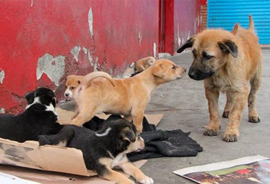 Venezuela Street Dogs