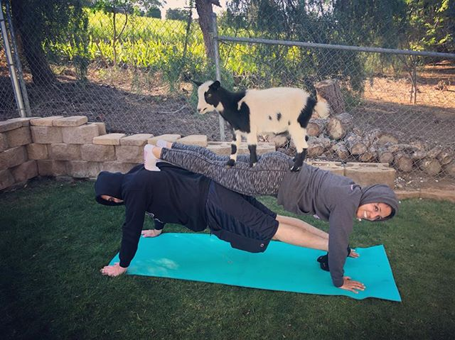 We might not be yogis, but I think you you can call us goat-gis! Check out our story for the full recap. And if you want to laugh and meet cute animals, do GOAT YOGA!
