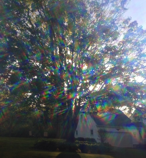 Diffraction Shades by   capture-life-with-lens.tumblr.com -  This image serves as an accurate replication of diffraction as seen on a tree.