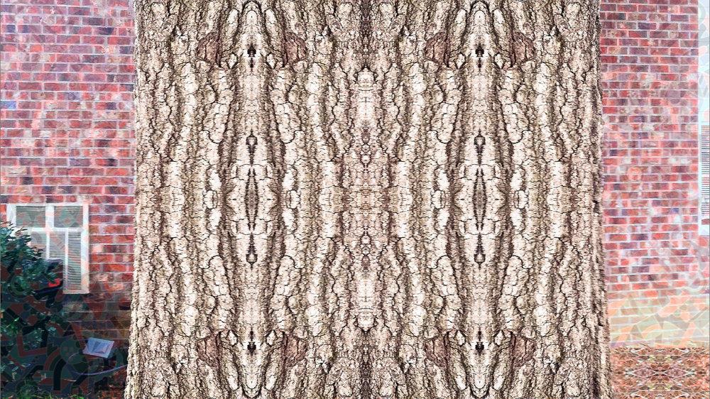Symmetry_on_treebark.jpg