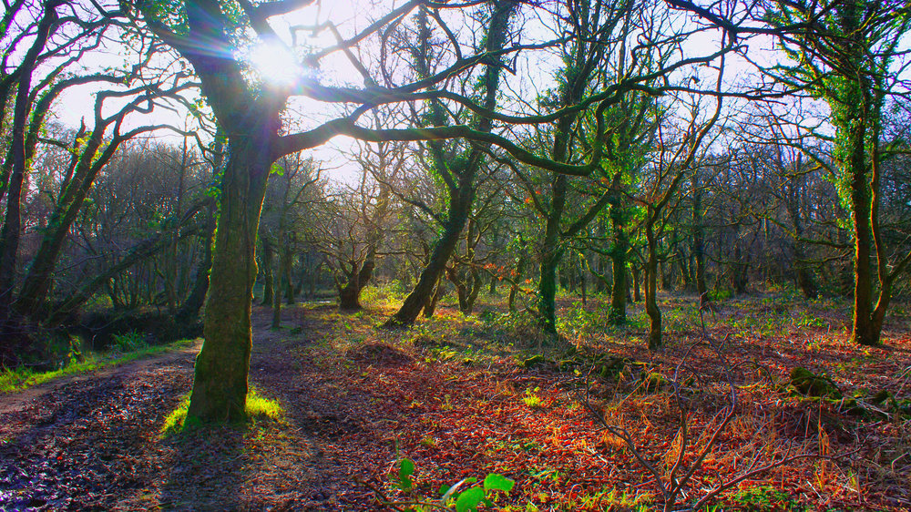 Colourful welsh woods