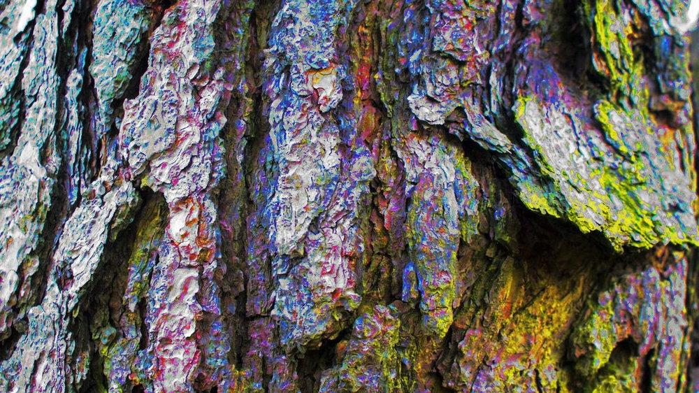 LSD tree bark