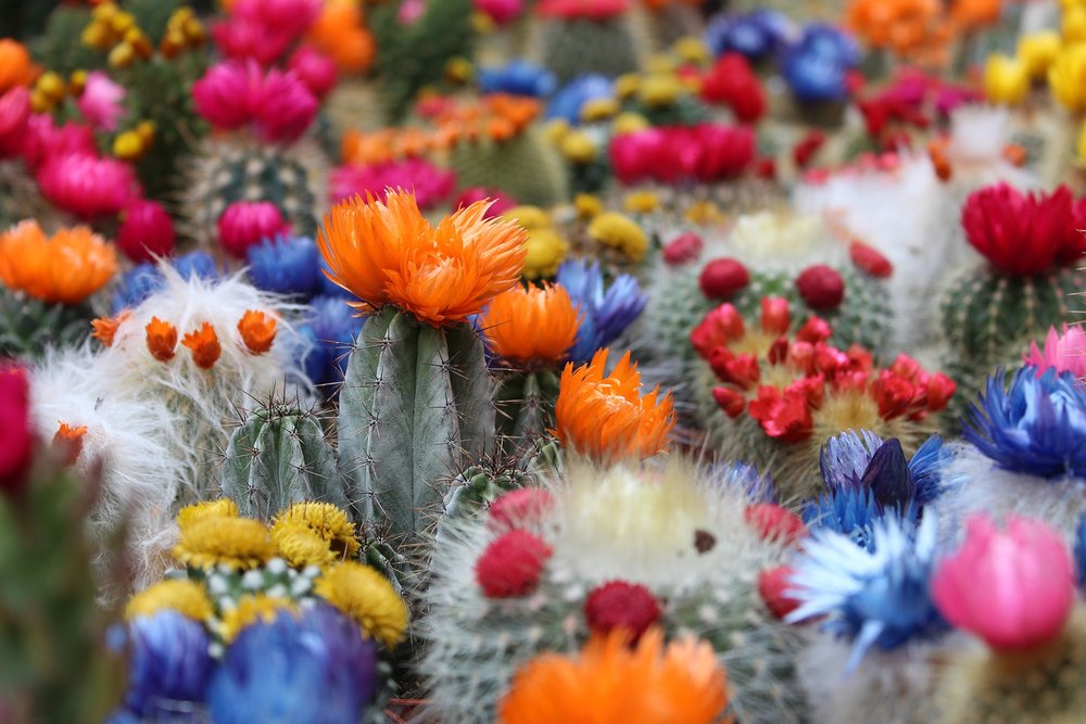 Cue the time of year where I look up images that remind me of warm weather. Cactus anyone?