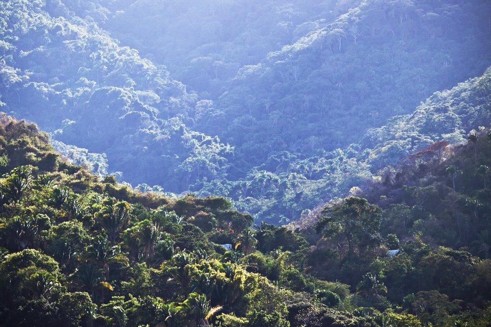 yelapa-trees.jpg