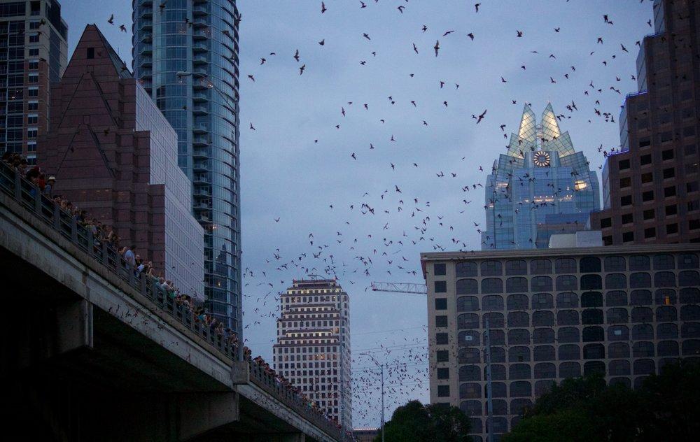 Congress Bridge Bats  - Austin, TX