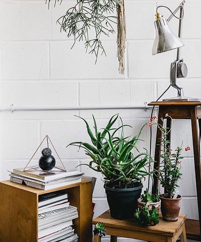 Office goals ❤️🌿 via the fabulous @houseofplants . . . . #yonahome #plantbased #naturaldye #indoorplants #plantstyling #succulent #vegan #botanical #nature #dailyinspiration #sketchbook #ecofriendlyfashion #slowfashion #boho #jungalow #jungalowstyle #plantsplantsplants #printmaker #smallbusinesslove #design #artisan #crueltyfree #indigo #plantstagram #interiordesign #blockprint #decor #whitebrick #houseofplants