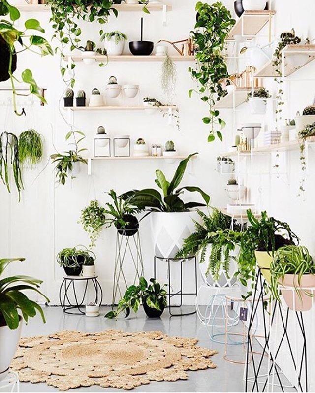 Green styling @ivymuse_melb 🌿🌿 . . . ⠀⠀ #yonahome  #decoration #botanical #interiordecor #interiorstyling #inspire_me_home_decor #plantstyling #nature #blockprint #printmaker #naturaldye #plantbased #ecofriendly #indigo #vegan #boho #inspiration #plantstagram #design #sketchbook #slowfashion #sustainable #yona #artisan #crueltyfree #jungalowstyle #ecofriendlyfashion #smallbusinesslove #indoorplants