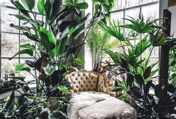 Another gorgeous piece of indoor garden inspo for a Tuesday afternoon. Dream office phase2.....Image by @hiltoncarter . . . #plantstyling #plantdecor #yonahome #jungalowstyle