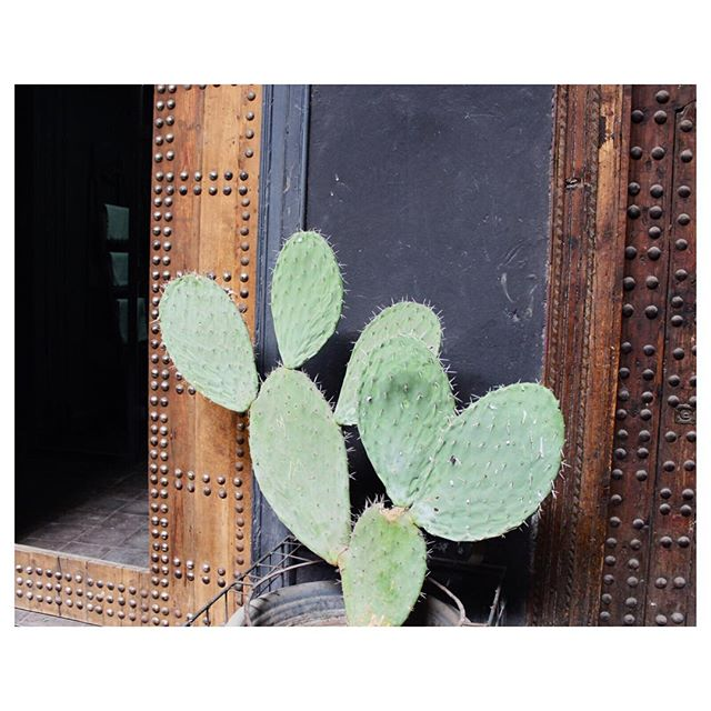 D E S E R T . . Arid plant life on slate grey against the riad walls of Marrakech . . #yonahome #plantwear #botanical #vegan #natural #wood #plantstyling #travel #bohostyle #veganfashion #ecofriendly #sustainable #naturaldye #indigo #travel #blockprint #handmade #ethicalfashion #ethical #composition #plantbased #vegan #interiordesign #travel #jungalowstyle #greydecor #cactus