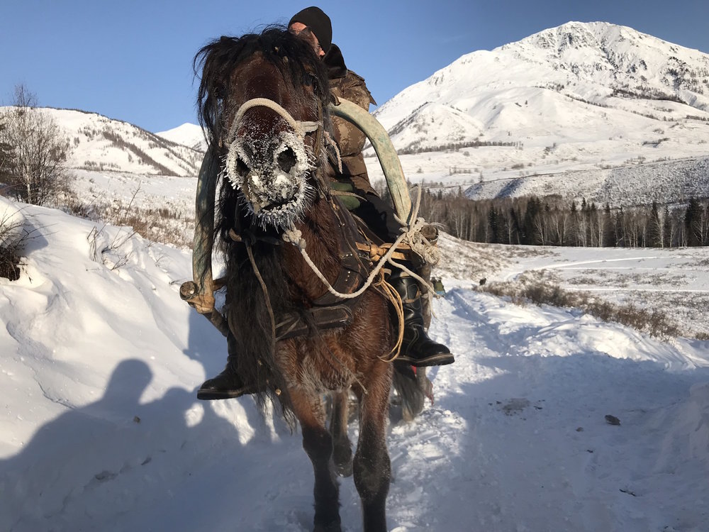 Horse transport to the slopes