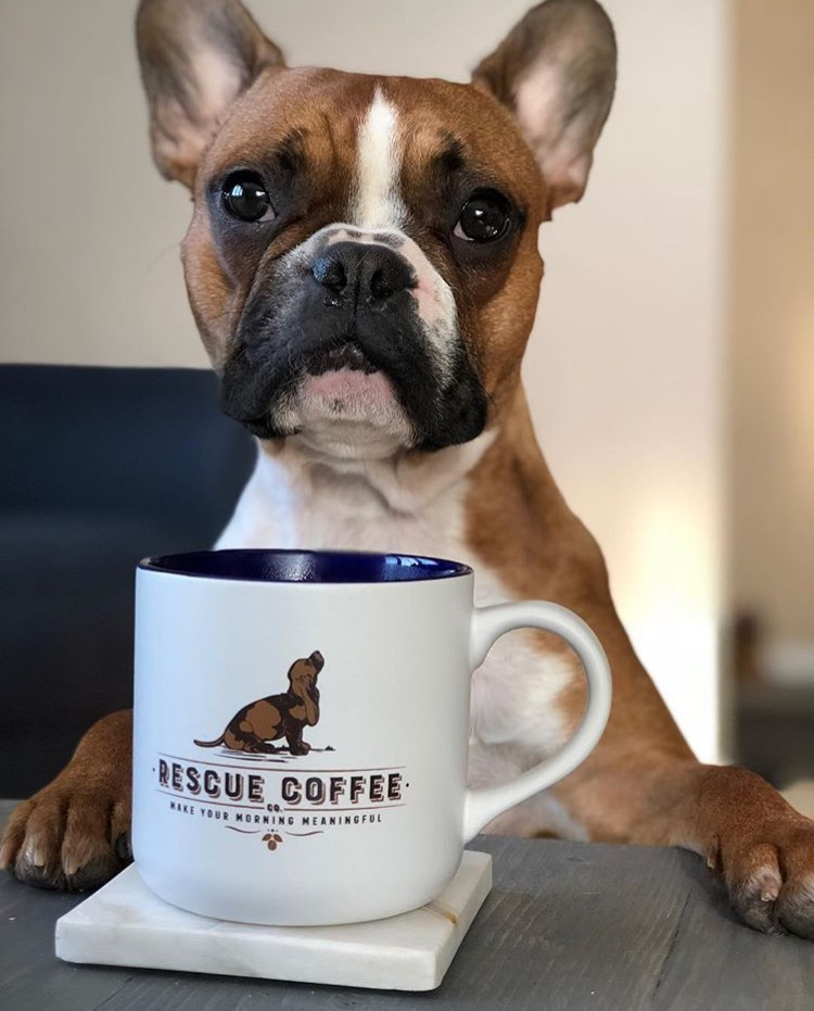 RescueCoffee-Frenchie.jpg