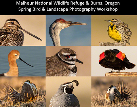 Postcard from Malheur NWR & Burns Oregon