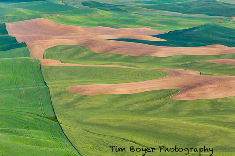 Palouse patterns from Steptoe Butte.