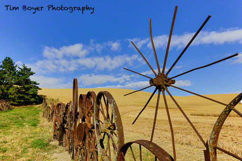 This is my favorite image of the  Uniontown Wheel Fence.  I like the  spiky wheel, and I think the  whole fence looks better with  golden wheat behind it.
